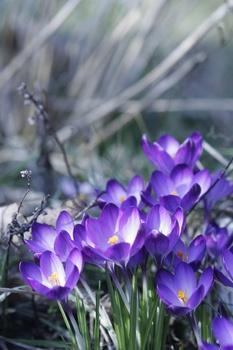 Blumenzwiebeln nach der Blüte richtig pflegen