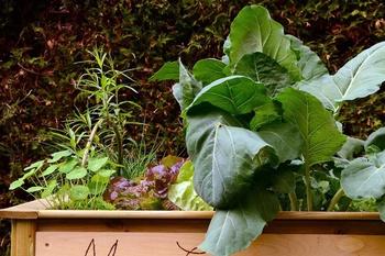 Gemüse auf wenig Platz anbauen