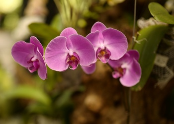 Orchideen vermehren – so gelingt es