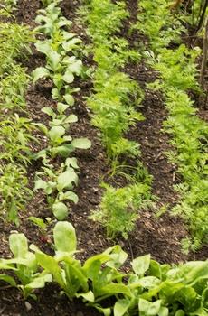 Unkraut im Garten vermeiden