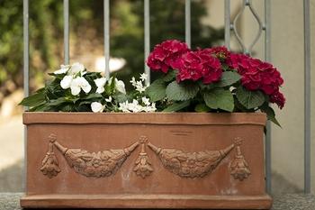 12 Balkonpflanzen für den halbschattigen Balkon