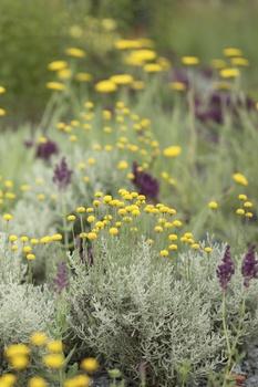 12 Schritte zum idealen Blumenbeet