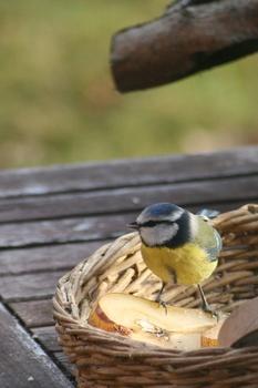 Sind Küchenabfälle zum Füttern von Vögeln geeignet?