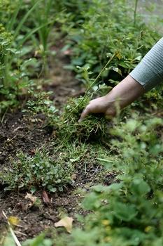 8 Tipps, um den Garten auf Trockenheit vorzubereiten
