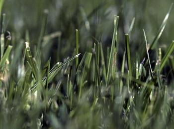 Wie der Rasen Trockenheit übersteht
