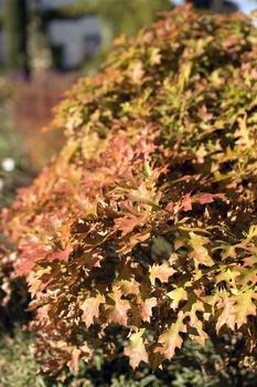 Gartenarbeit im Oktober