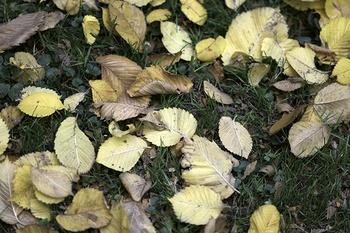 10 Gartenarbeiten, die im Herbst zu tun sind