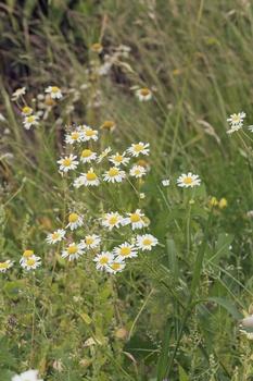 Wildblumenwiese anlegen - Tipps für einen blühenden Garten