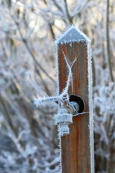 Fehler bei der Gartenarbeit im Winter vermeiden