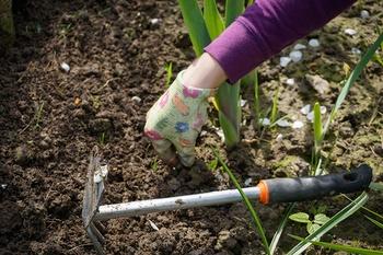 Die besten Tipps, um Unkraut im Garten mit wenig Aufwand zu jäten