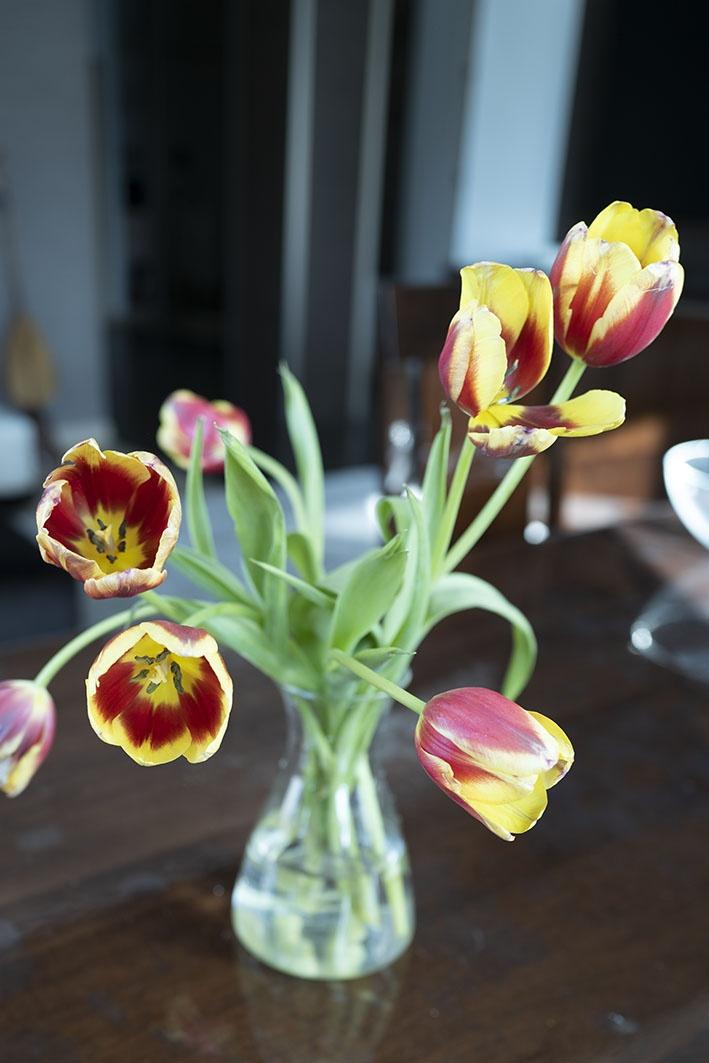 So bleiben Tulpen länger frisch