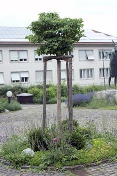 Baumscheiben bepflanzen