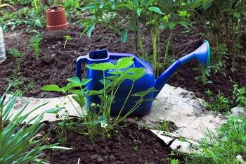 Pflanzen stärken mit Brühen, Jauchen und Tees