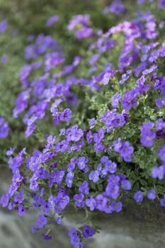 Die schönsten Bodendecker für sonnige und trockene Standorte
