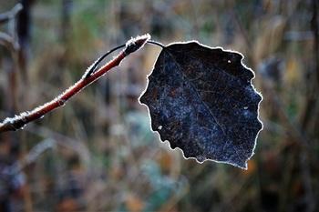 Frostschäden an Pflanzen – das solltest du tun