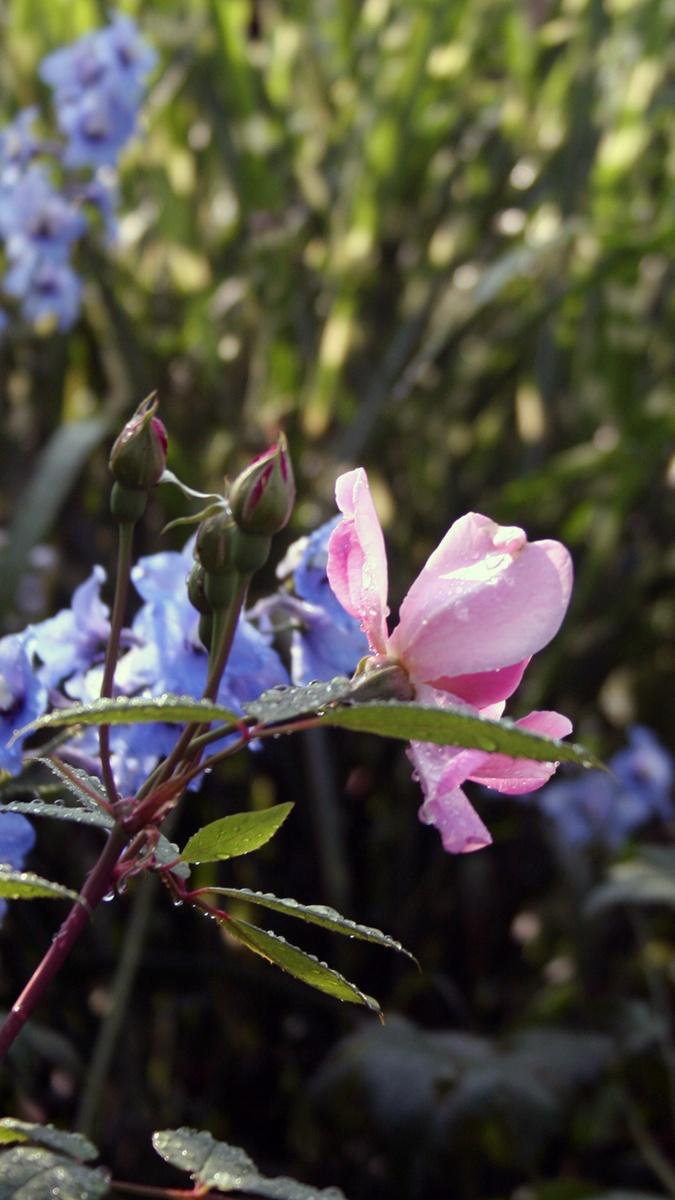 Cottage garten pflanzen  Freudengarten - Die besten Pflanzen für einen Cottage Garten