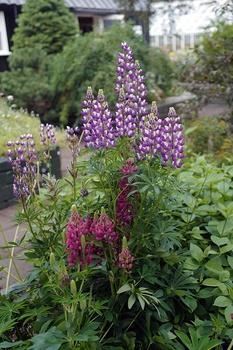 Blumen, die du im April ins Freiland säen kannst