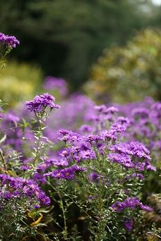 14 Gartenarbeiten im September