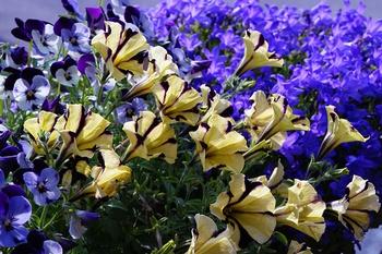 Die 9 schönsten Balkonblumen für die Sonne
