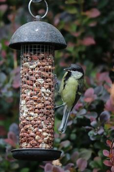 Vögel füttern ohne Dreck