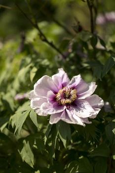 10 Pflanzen mit großen Blüten für den Garten