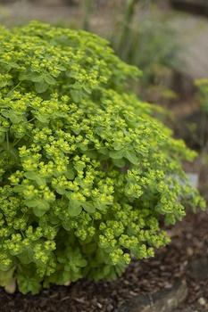 Pflanzen mit grünen Blüten