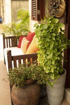 4 Tipps, um preisgünstig und nachhaltig an Zimmerpflanzen zu kommen