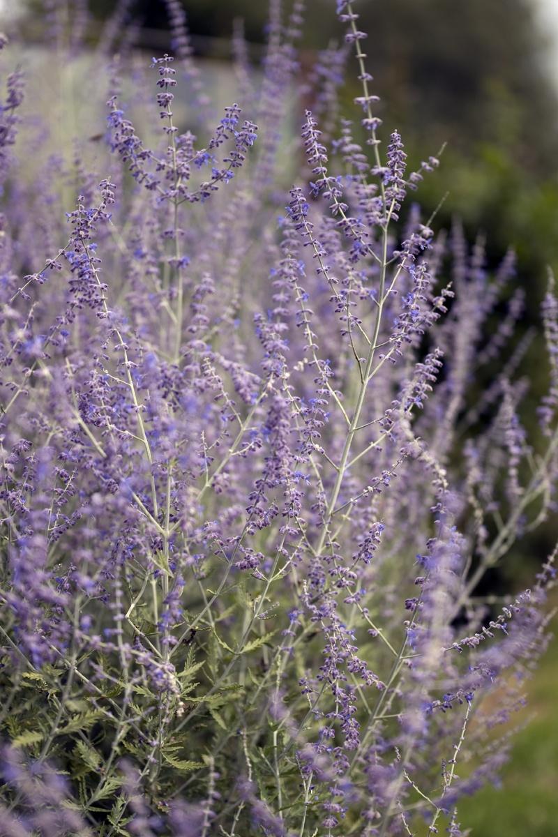 Außergewöhnlich Pflanzen für trockene Standorte #NH_55