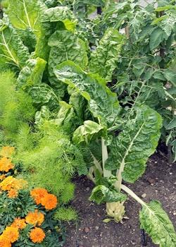 Gemüse säen im Juli