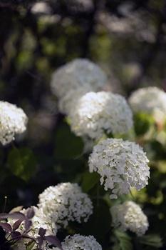 15 blühende Pflanzen für den Schatten an der Nordseite des Hauses