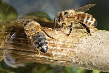 Natürliche Nisthilfen für Wildbienen