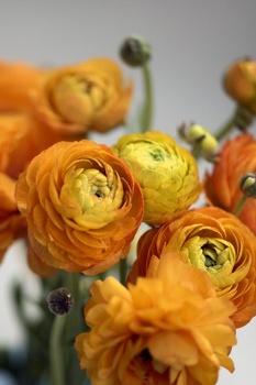 8 Pflanzideen für den Balkonkasten im Frühling