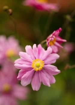 7 unverwüstliche Blumen, die bei jedem Wetter gedeihen