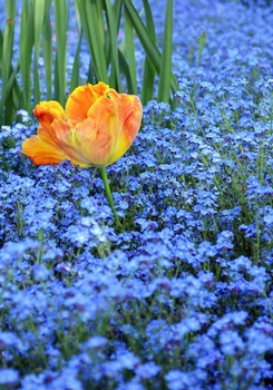 Was du im Herbst für einen zauberhaften Frühlingsgarten pflanzen solltest
