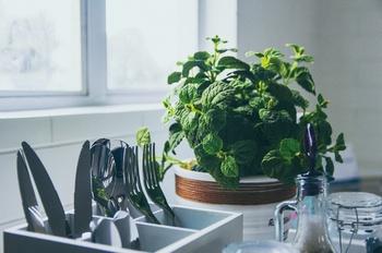 Die besten Pflanzen für die Küche