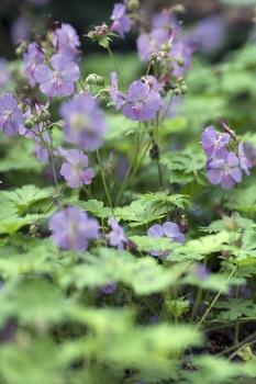 Laub schluckende Pflanzen