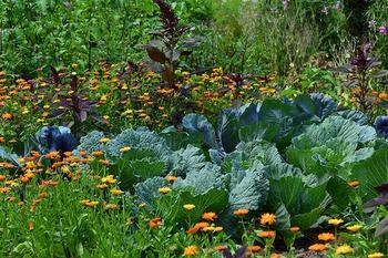 8 Tipps, wie du Wasser im Gemüsegarten sparen kannst
