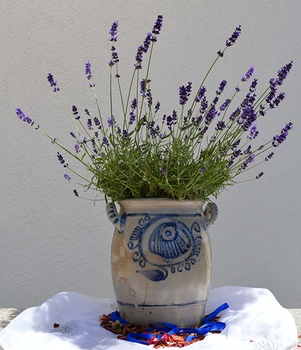 Lavendel im Topf richtig pflegen – so geht es!