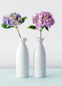 So bleiben Hortensien in der Vase länger frisch