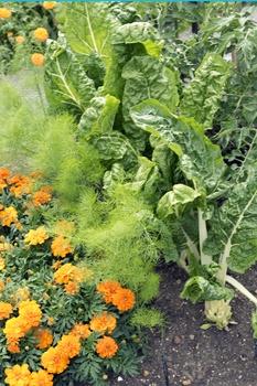 Bienenfreundlicher Gemüsegarten