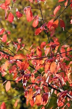Wann und wie du Bäume im Herbst gießen solltest