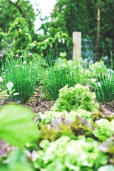 Hügelbeet anlegen und richtig bepflanzen