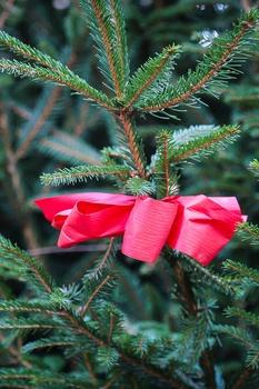 Weihnachtsbaum recyceln statt entsorgen