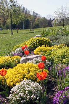 12 früh blühende kleine Blumen