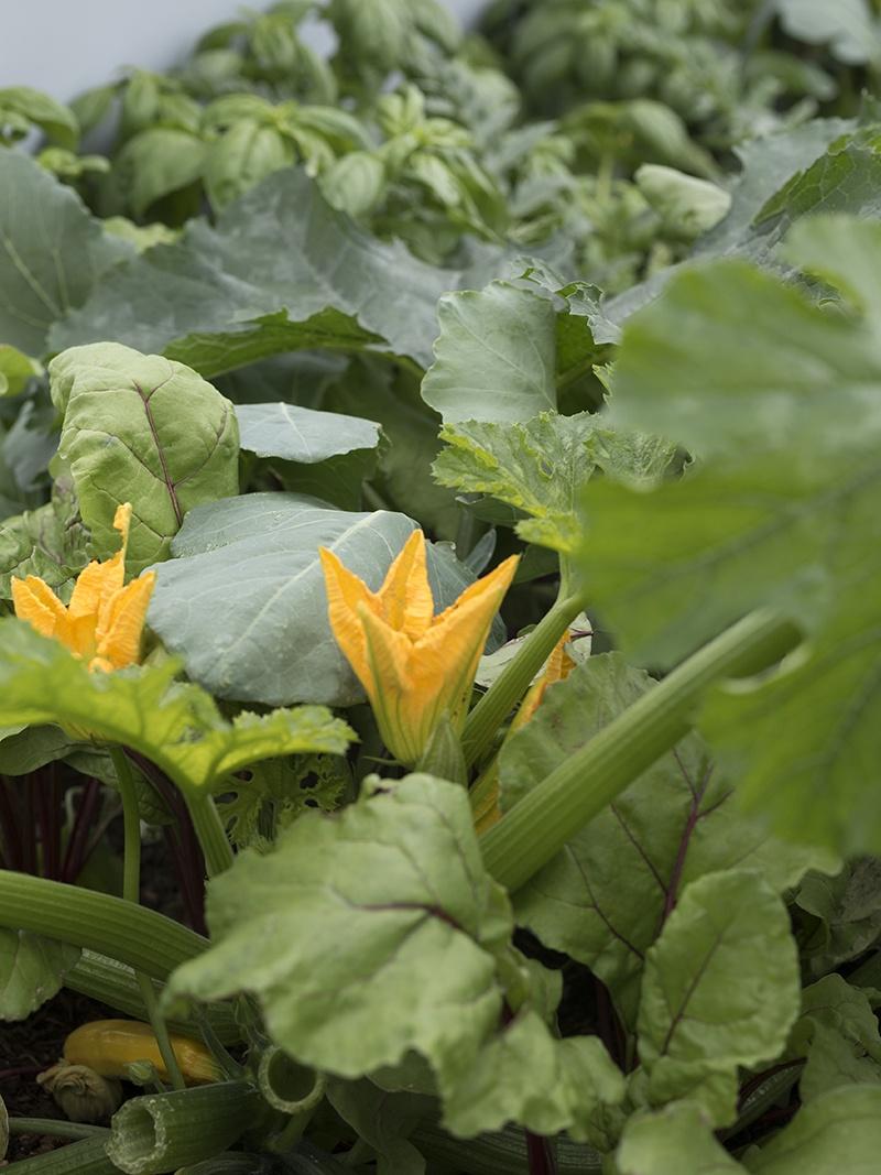 Welches Gemüse Auf Dem Balkon Anbauen