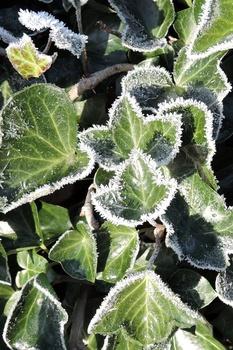 Garten im Winter gießen
