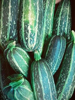 Achtung: Bittere Zucchini sind giftig