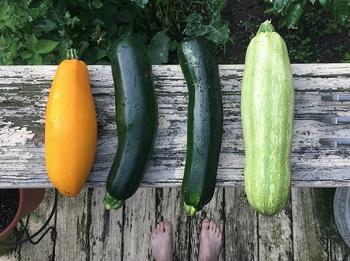Zucchini anbauen – 3 Tipps für mehr Ertrag auf weniger Platz