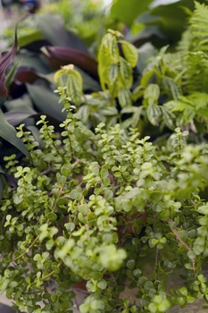 Die 9 besten Pflegetipps für Zimmerpflanzen
