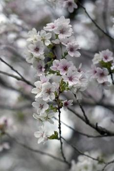 Frühlingszweige fürs Zimmer